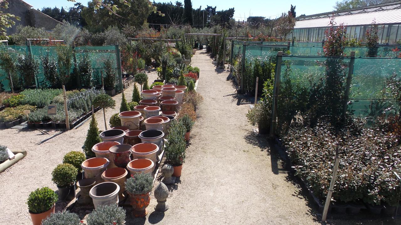 Poteries d'anduze + arbustes