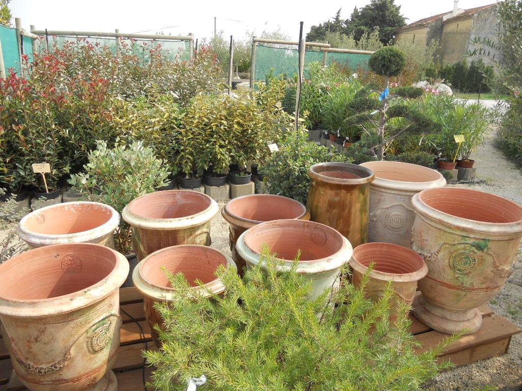 Arbustes de haies + poterie d'anduze