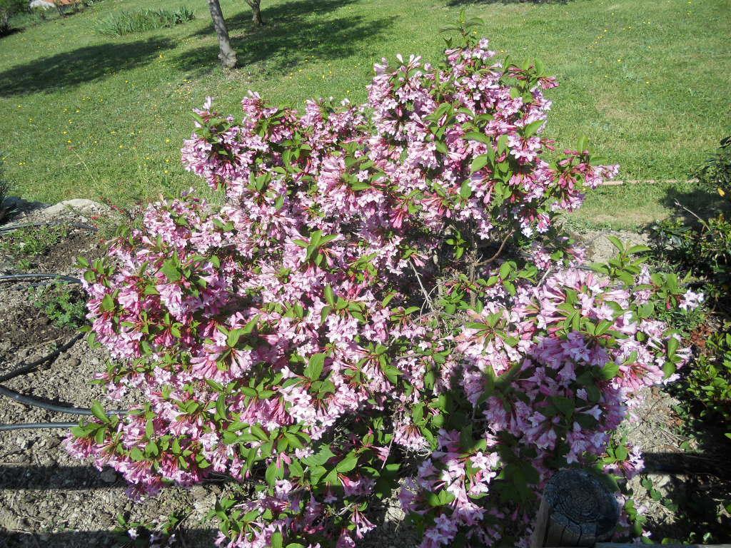 nos plantes et arbustes coup de coeur
