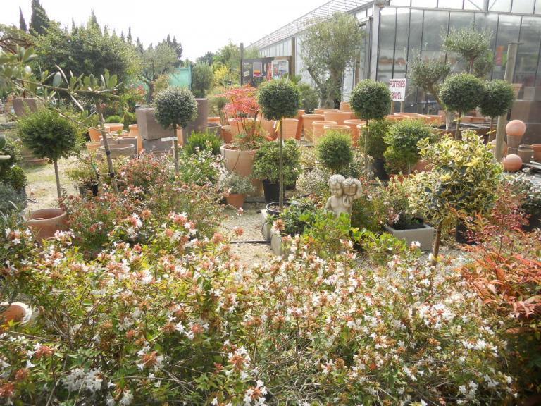 Entrée serre arbustes divers