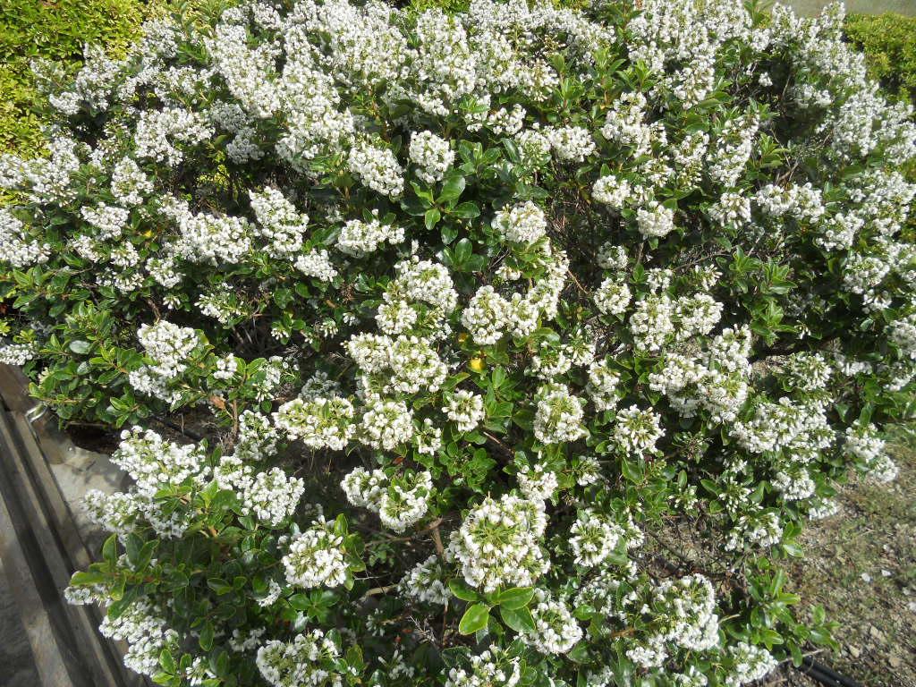 Quelques plantes et arbustes pour vous aider composer un for Savoir composer un beau jardin