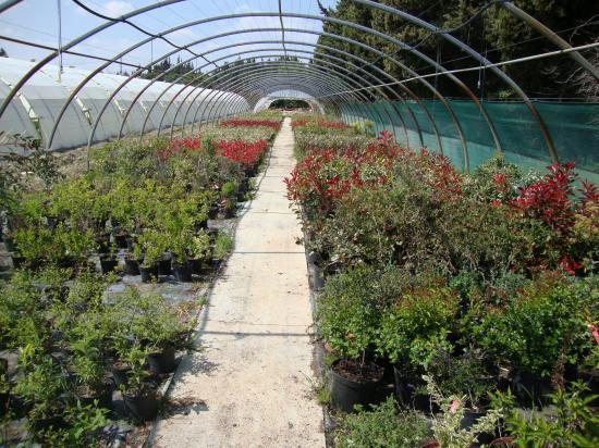 Production d'arbustes de haie et a fleurs