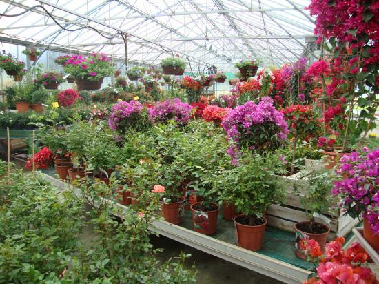 Plantes et fleurs diverses