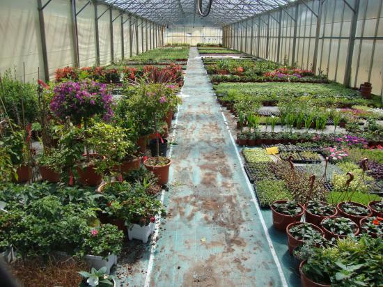 Production de jeunes plants de fleurs