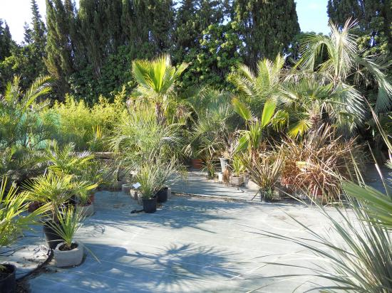 Palmiers,bambous....