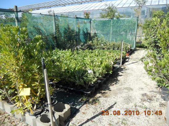 Arbustes de haie