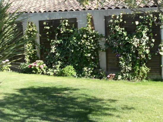 Plantes grimpantes sur facade